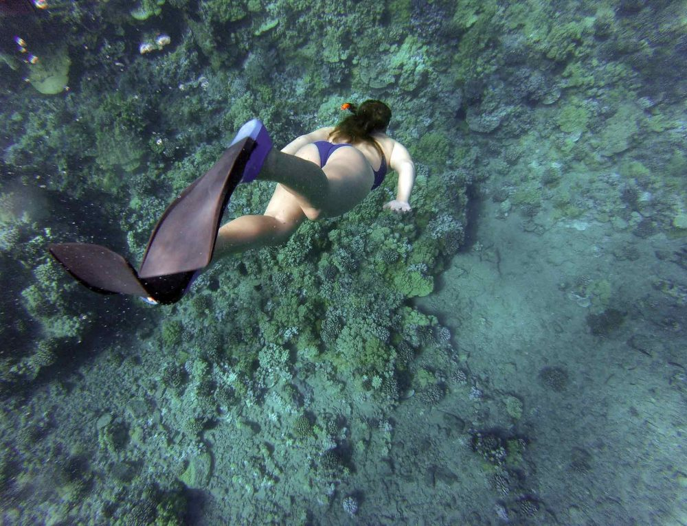 Top 9 Best Freediving Fins Of 2018