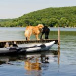 Top 10 Best Kayaks for Dogs for [currentyear]