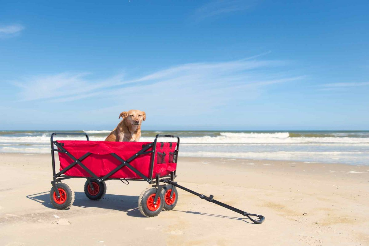 best beach cart wagon