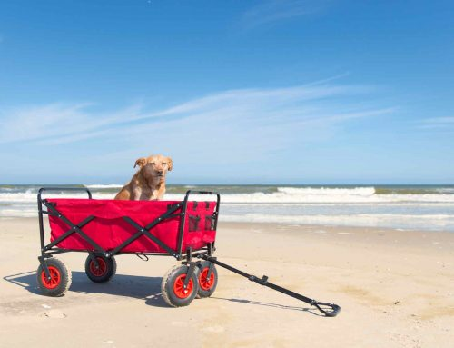Top 8 Best Beach Carts and Wagons for 2019