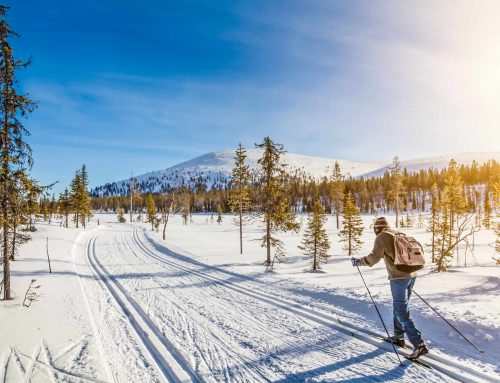 Top 8 Best Cross Country Skis for 2020