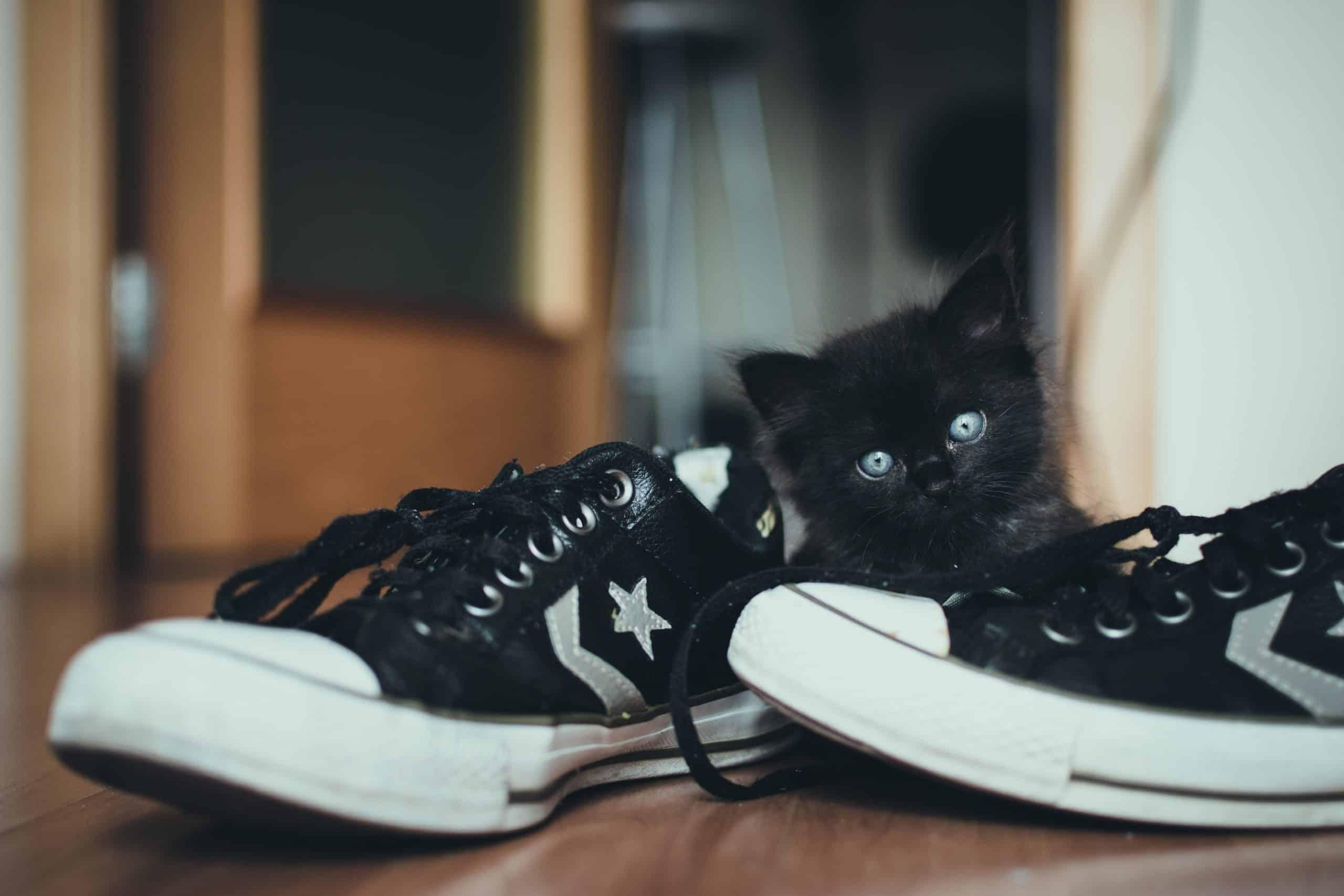 Converse Good Skate Shoes
